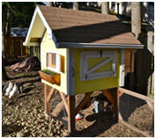 Backyard Chicken Coop Design