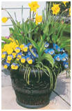 Container Garden Designs from Garden Gate Magazine