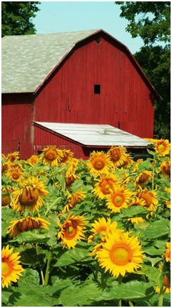 Free Barn Plans, Outbuilding Plans, Do It Yourself Projects and