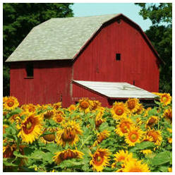 Free Plans for Barns and Country Outbuildings