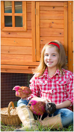 Free Chicken Coop and Country Outbuilding Plans