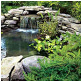 Popular Mechanic Magazine's Water Garden Pond Builder's Guide