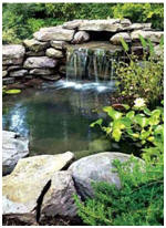 Free water garden and koi pond building guides and project for Koi pond construction guide