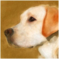Today's Free Painting Lessons, Demonstrations, Tips and Techniques: Acrylic Pet and Animal Portraits