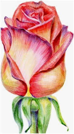 Free Do It Yourself Colored Pencil Drawing Lessons and Demonstrations