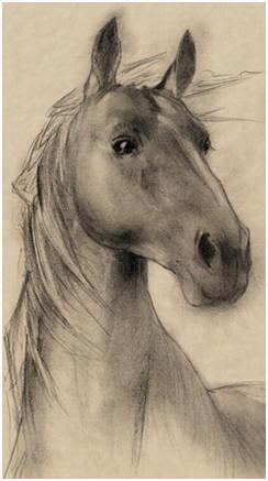 free pet and animal drawing tutorials