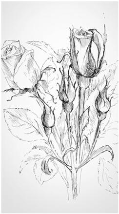 Learn how to draw and sketch beautiful flower and still-life scenes. Enjoy free lessons and tutorials by talented professional artists.