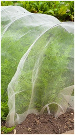 Free Cold Frame Plans and Building Guides