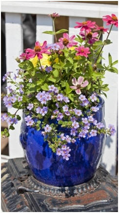 Learn How to Have Amazing Gardens in Planter Pots - Grow beautiful flowers, vegetables, fruit and herbs indoors and outdoors with free, how-to guides.