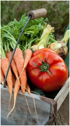 Grow a Bountiful Garden - Just click to find and use hundreds of free gardening guides and project plans.