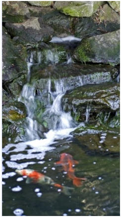 Free Water Garden And Koi Pond Building Guides And Project Plans